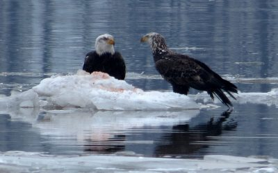 The Eagles are Counting on You