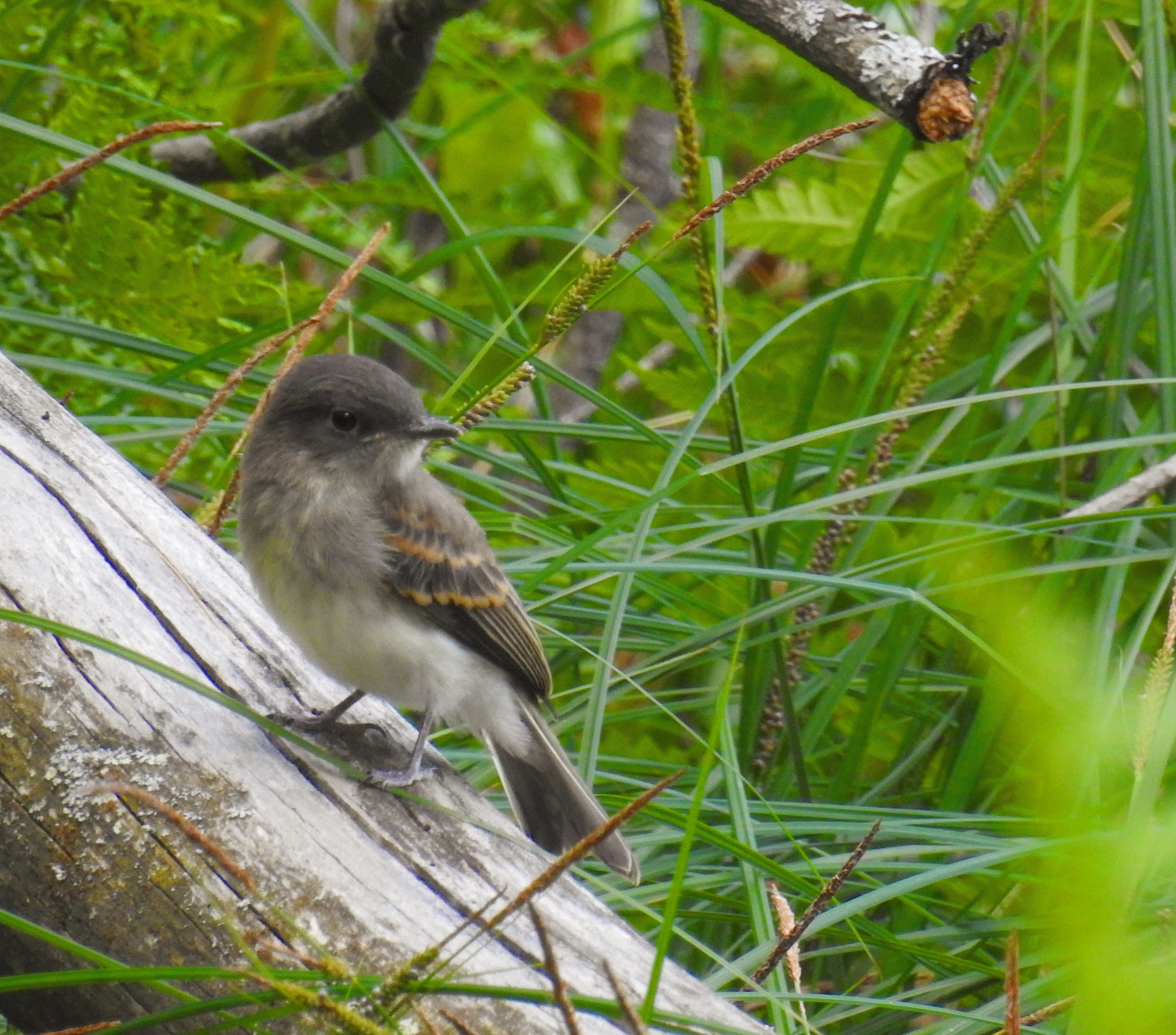 bedford audubon society about birds