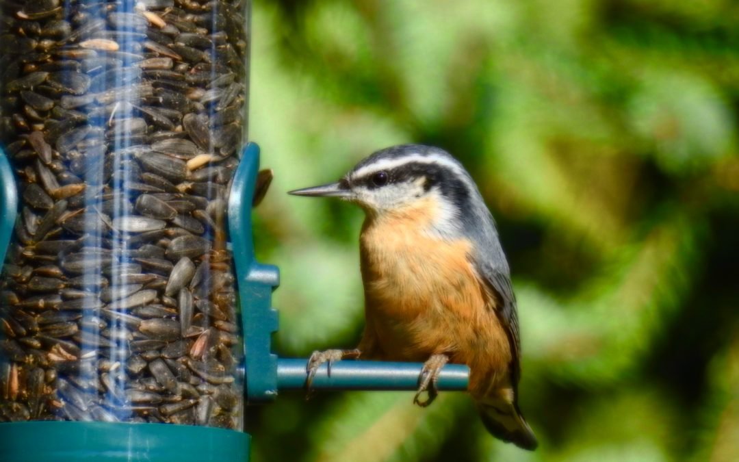 Do You Want To Attract More Birds All Year?