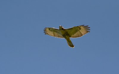 Bedford Audubon Announces Change in Leadership