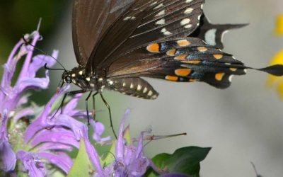 Lecture: Elizabeth Stein on Planting for Birds and Pollinators