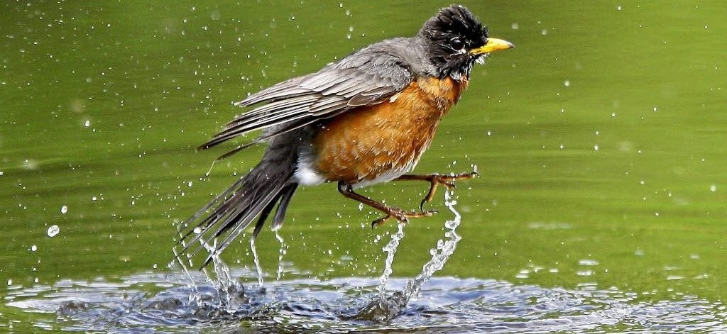 The Great Equalizer: What do Birds do in the Rain