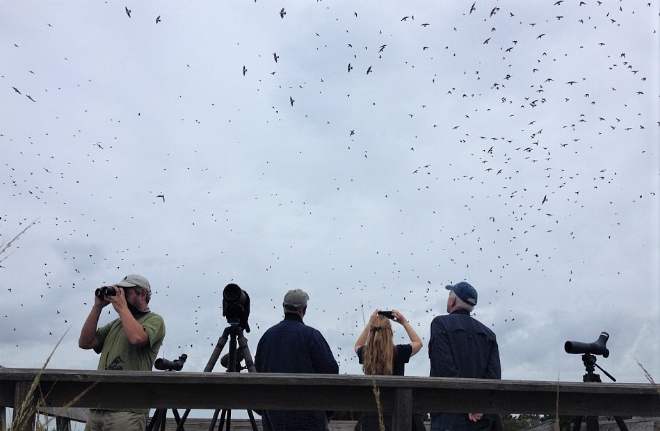 Join us for a Cape May Birding Extravaganza on October 6-9