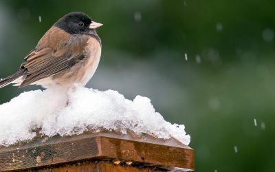 Community Science: Christmas Bird Count Season
