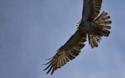 September Hawkwatch, Canoe Trip, Garden Safari + More!