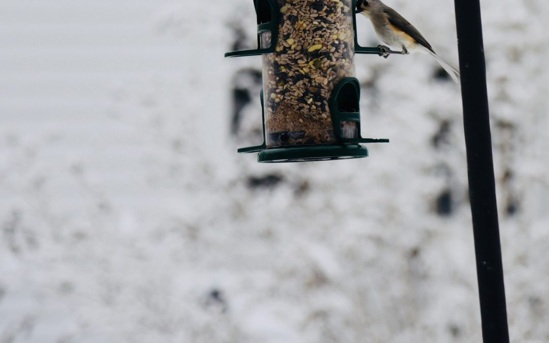 CITIZEN SCIENCE: The Great Backyard Bird Count