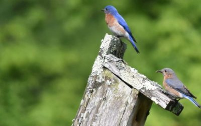 April Environmental Education: Bird Walks, Nature Hikes, Lectures