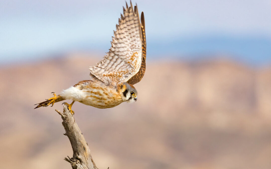 The Magic of Migration: September Programs